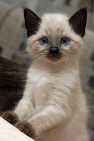 czy_zwierze_to_dobry_pomysl_na_prezent_kotek