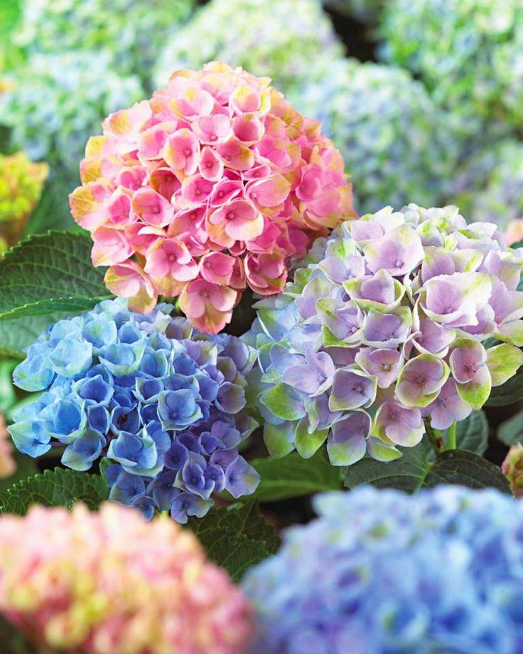 jak_wreczac_kwiaty_kwiatki